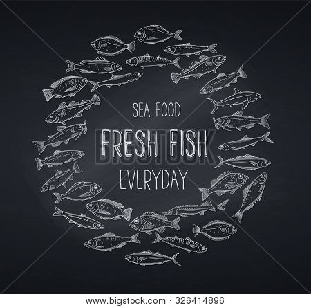 Vector Banner Hand Drawn Fish. Design Chalk Seafood With Bream, Mackerel, Tunny Or Sterlet, Codfish