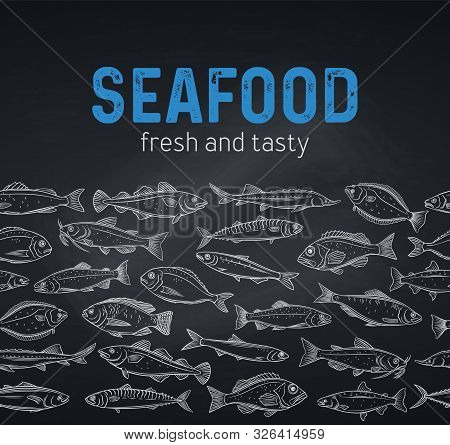 Vector Border Hand Drawn Fish. Design Chalk Seafood With Bream, Mackerel, Tunny Or Sterlet, Codfish