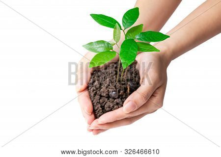 Hands Holding A Young Plant, Isolated On White Background, Clipping Path. Concept Of Environmental A