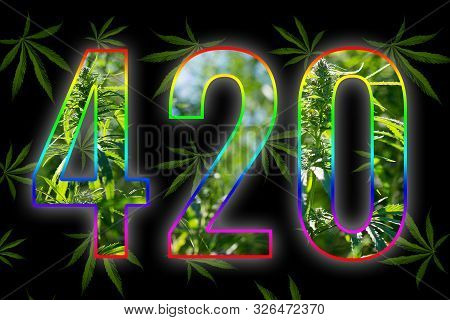 Cannabis Leaves On A Black Background. Figures 420 Laid Out From Hemp Leaves. Four-twenty. Conceptua