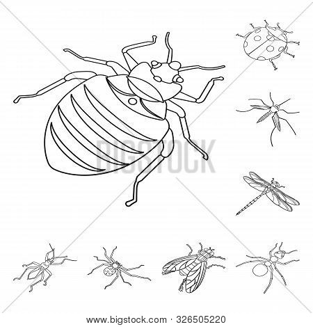 Isolated Object Of Fauna And Entomology Sign. Set Of Fauna And Animal Stock Symbol For Web.