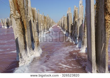 Palisade Of The Wooden Frame Of The Destroyed Dam On The Lake Sasyk Sivash With Rose Water In The We