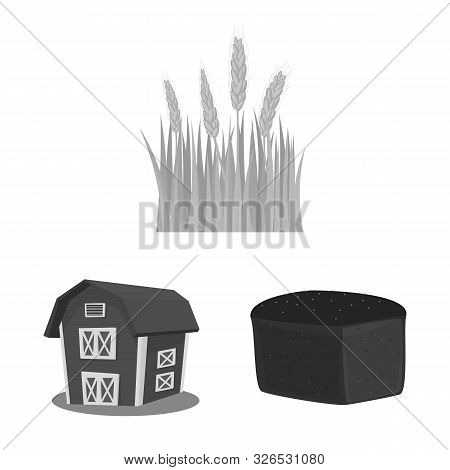 Isolated Object Of Rye And Plant Symbol. Set Of Rye And Corn Stock Symbol For Web.