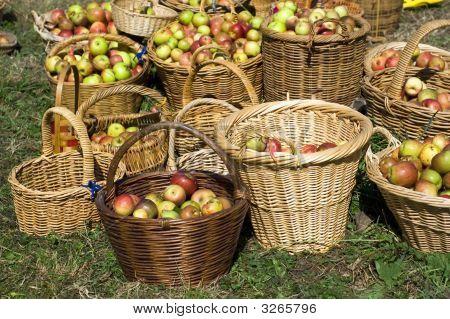 New Season Apples