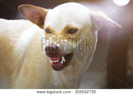 The Ferocious Dog Saw Terrifying Teeth And Chewing.