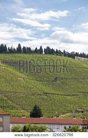 Tain L Hermitage, France - June 28, 2017: View Of The M. Chapoutier Crozes-hermitage Vineyards In Ta