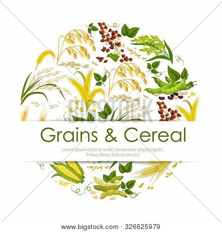 Grains And Cereals, Frame Of Plants And Seeds. Vector Food Products, Corn And Green Pea Pods, Legume