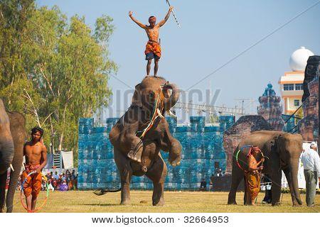 Elephant Hind Legs Trainer Head