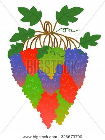 Grape Bunch Or Berry Cluster, Vine Plantation Harvest Vector. Vineyard, Wine Ingredient, Viticulture