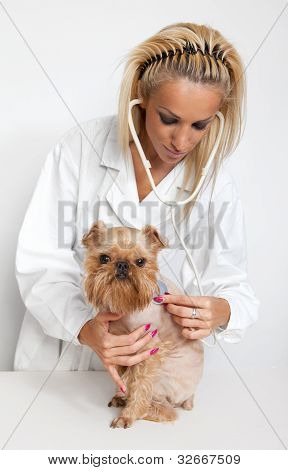 Veterinary Doctor And A Dog