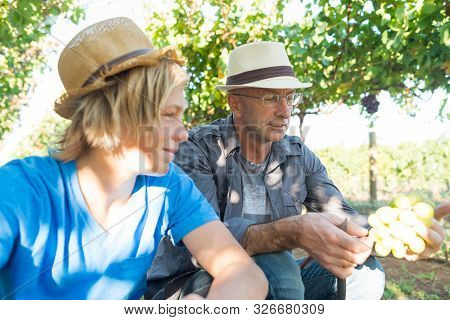Winemakers Father And Son In Vineyard. Family Winery Business. Wine Grower Man In Straw Hat Examinin
