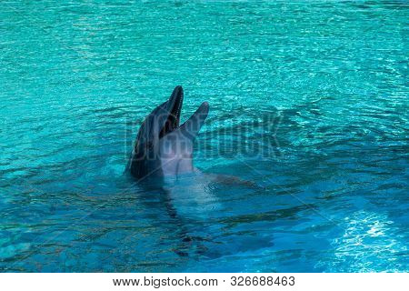 Playful Dolphin Sticking Its Head Out Of The Water