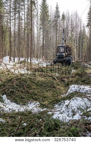 Image Of Logger Rides Through Forest After Felling