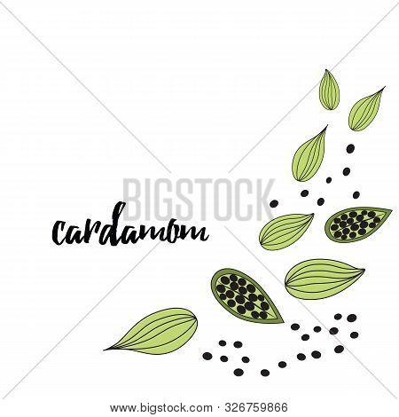 Cardamom Spice. Hand Drawn Style Vector Illustration Of Cardamom. Frame. Food Design Element.