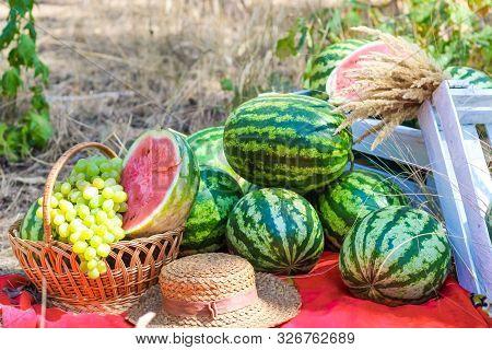 Autumn Still Life. Watermelon Fruit Picnic Photozone