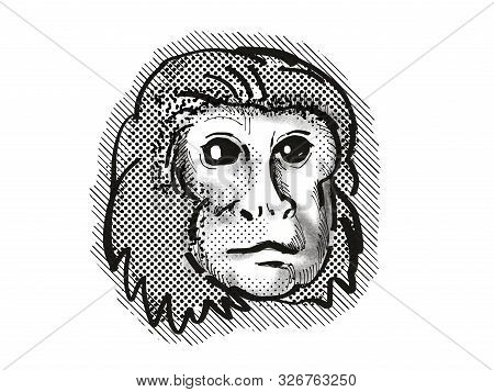 Retro Cartoon Style Drawing Head Of A Golden Lion Tamarin , A Monkey Species Viewed From Front On Is