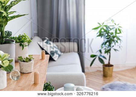 Stylish And Boho Home Interior Of Living Room With Wooden Shelf, Design Gray Sofa, A Lot Of Plants A