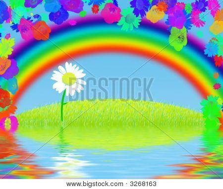 Chamomile Under A Rainbow