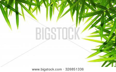 Bamboo Leaves Isolated On White Background. Beautiful Leaf Texture In Nature. Green Nature Backgroun