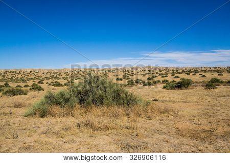 Green Creosote Bush In Dry Desert
