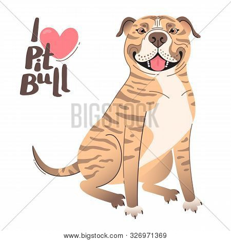 Fawn brindle brown American Staffordshire Pit Bull Terrier. I love pitbull. Vector illustration poster