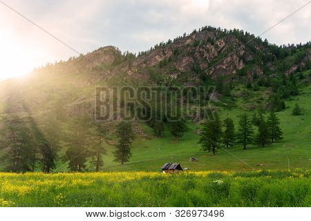 Old Wooden House On The Meadow, Where A Lot Of Grass And Wildflowers In The Mountain Forest Against
