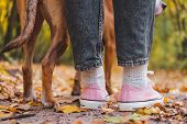 Human and dog's feet among autumn leaves, rear view. Close-up shot of sneakers and dog's legs side by side, the concept of companionship, bond between person and pet poster