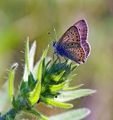 butterfly rests on the top of green plant poster
