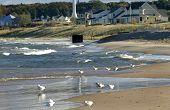 seagulls on beach along lake michigan poster