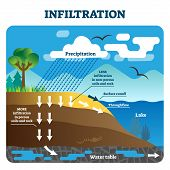 Infiltration vector illustration. Labeled natural precipitation water cleaning through underground soils, rocks and minerals. Scheme with earth climate scene. Educational geography climate circulation poster