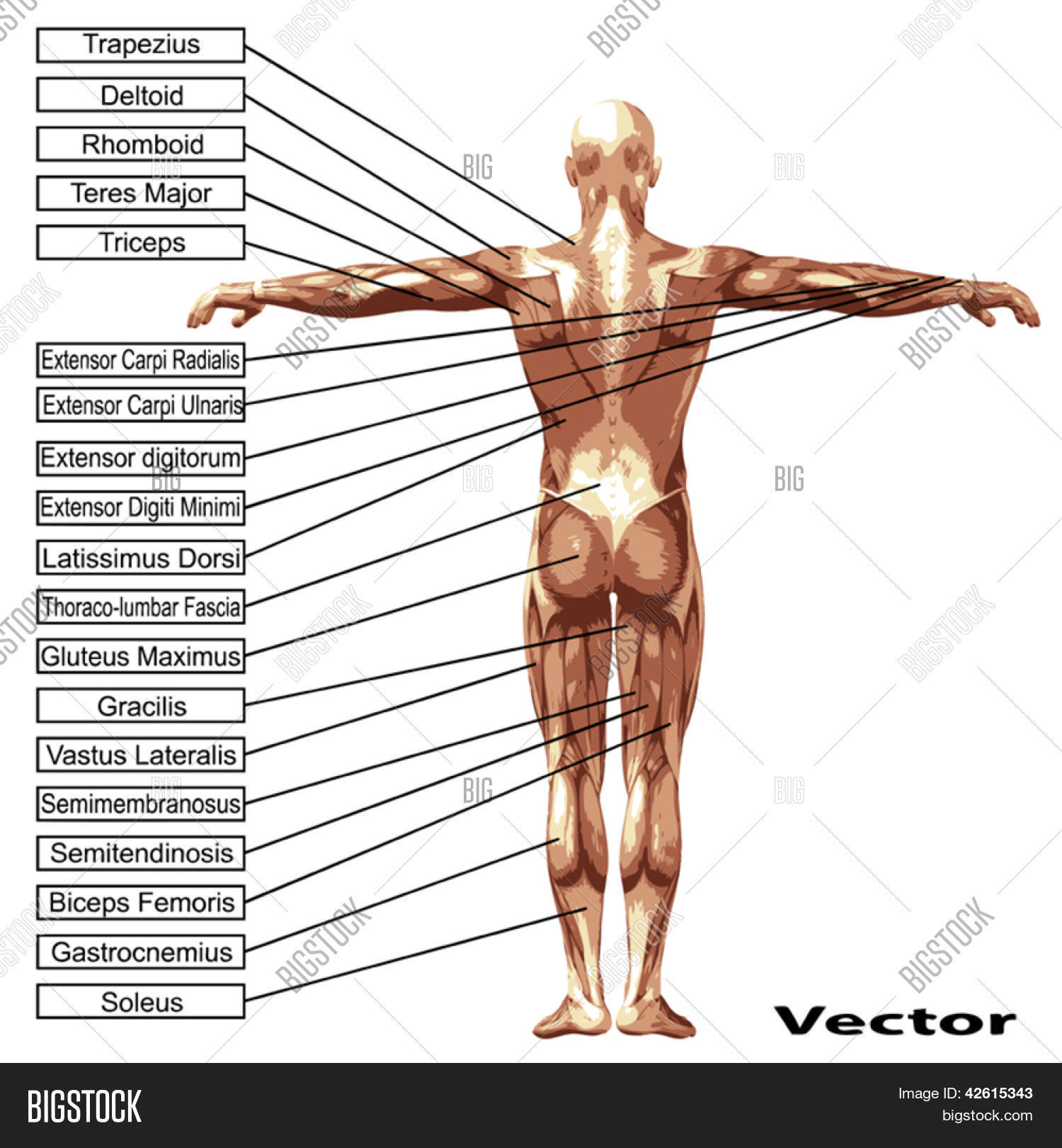 3d Vector Male Human Vector Photo Free Trial Bigstock