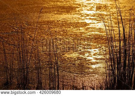 Sunset On Lake And Silhouette Of Grass, Bright Yellow Orange Colors On Water Surface Of Small Overgr