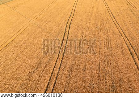 Magnificent Field Of Ripening Yellow Wheat In The Morning With Tractor Tracks At Sunny Morning - Aer