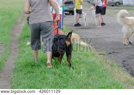 Group Of People Take Walk With Their Pets At Dog Park. Dogs Of Different Breeds And Ages Play On The