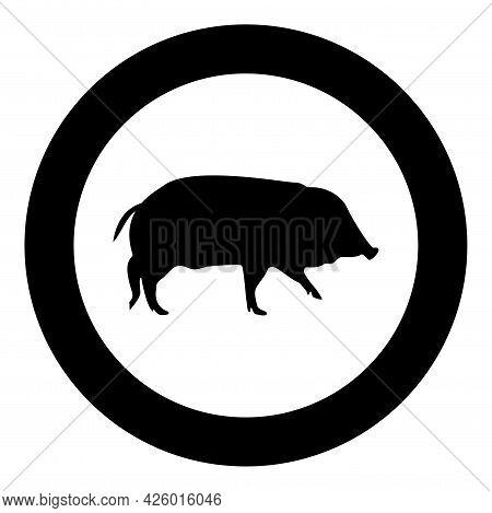 Wild Boar Hog Wart Swine Suidae Sus Tusker Scrofa Silhouette In Circle Round Black Color Vector Illu