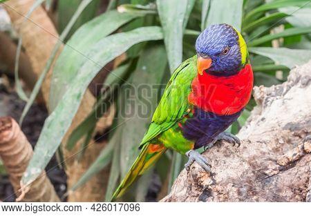 Colorful Rainbow Lorikeet Sitting On A Palm Tree Branch