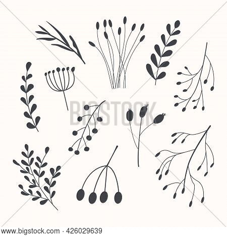 Set Of Autumn Herbarium. Different Branches With Berries And Leaves. Wild Forest Plants. Vector Coll