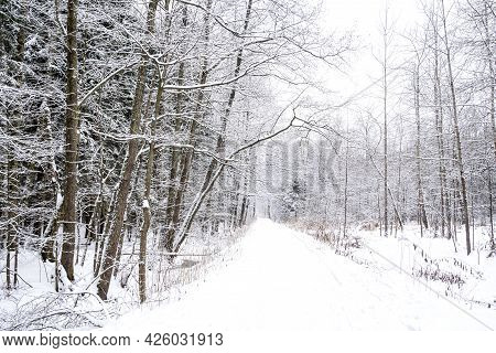 Snow Covered Road In Park Among Bare Leafless Trees Winter Landscape