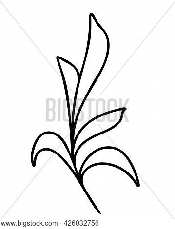 Branch With Sheets, Hand Drawing Vector Illustration. Single Deciduous Branch, Field Grass, Black Ou