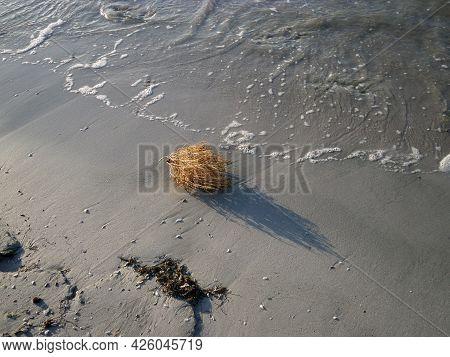 Dry Bush Of Grass. Tumbleweed. Sandy Coast Of The Caspian Sea. Kazakhstan. Mangistau Region. Novembe