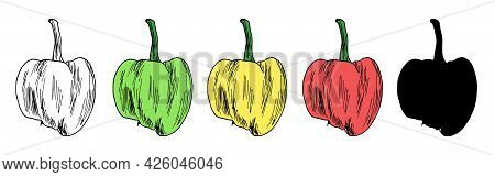 Vector Set Of Colorful Peppers. A Whole Pepper Hand-drawn In Sketch Style, An Isolated Contour And A