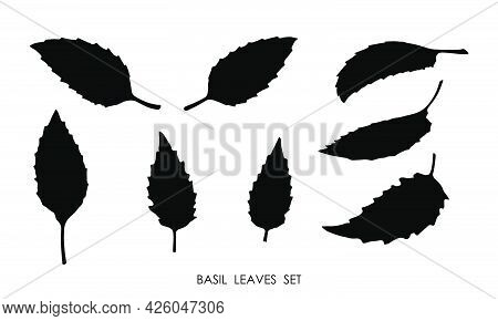 Black Silhouettes Of Basil Grass Leaves Isolated On White Background. Edible Plants, Seasoning For D