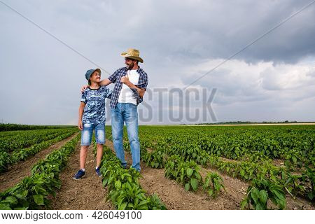 Father Is Teaching His Son About Cultivating Chili. Chili Plantation Successfully Sown. Farmers In A