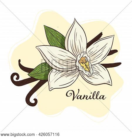 Vanilla Flower And Pods Illustration Line Art For Logo, Recipe, Menu, Background, Emblem, Print, Spa