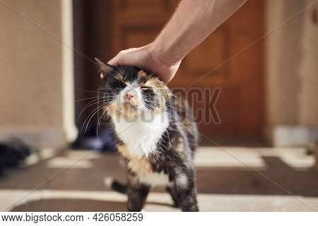 Domestic Life With Pet. Man Stroking His Mottled Cat Against Entrance Of House.