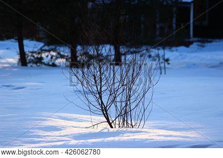 Winter Landscape, Bush In The Middle Of A Snowy Field