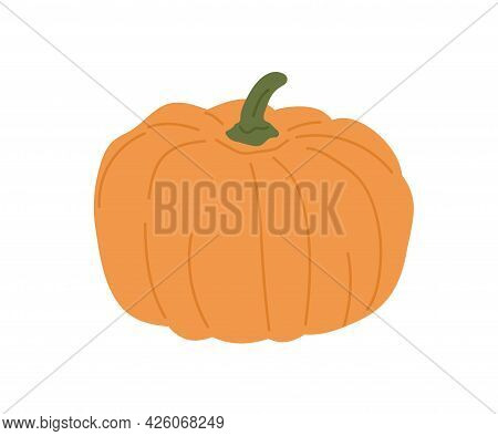 Round-shaped Pumpkin With Stem. Autumn Orange Vegetable. Fresh Fall Squash For Halloween Holiday. Oc