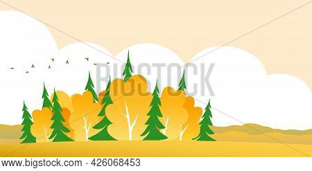 Golden Autumn In The Forest. Rural Landscape. Yellow Trees, Green Spruce, Wide Field And Horizon. Fl