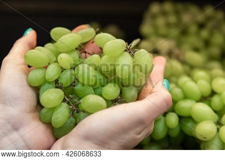 A Branch Of Green Ripe Grapes In Womens Hands. Choosing An Organic Food Buyer