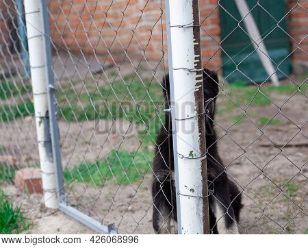 Beautiful Spotted Puppy Behind Bars Shelter, Animal Shelter, Dog Rescue, Hide And Seek, Volunteer Wo
